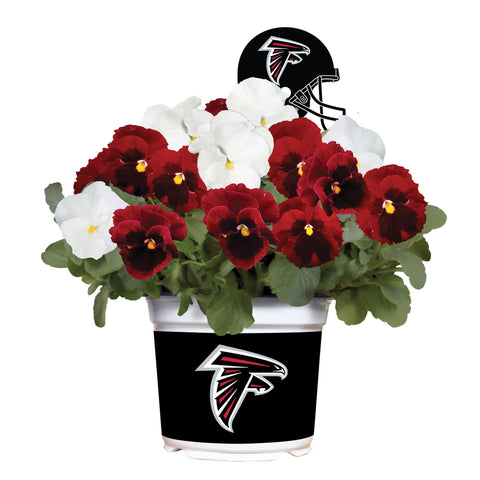 Atlanta Falcons - Pansy Mix