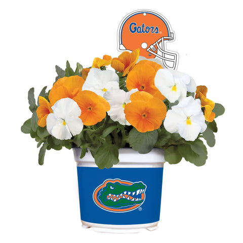 Florida Gators  - Pansy Mix