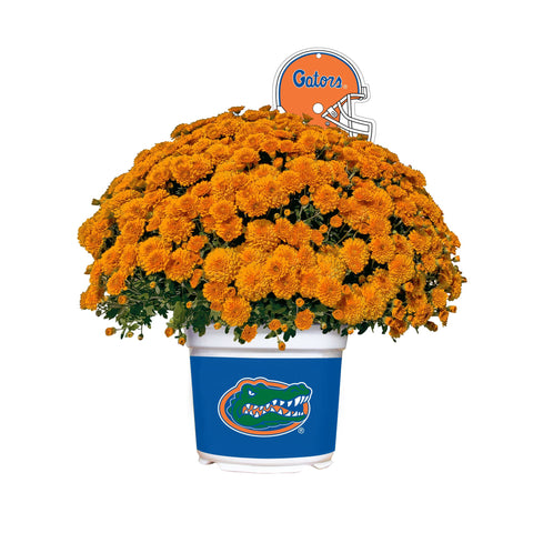 Florida Gators - Team Color Mum