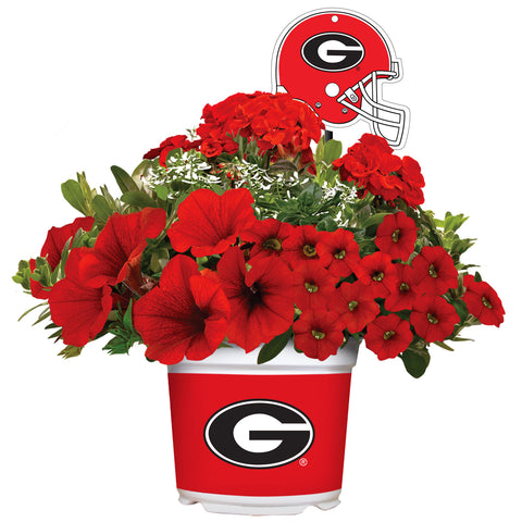 Georgia Bulldogs - Summer Flower Mix