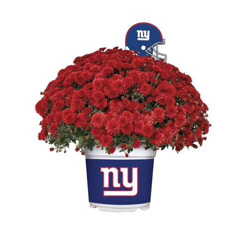 New York Giants - Team Color Mum