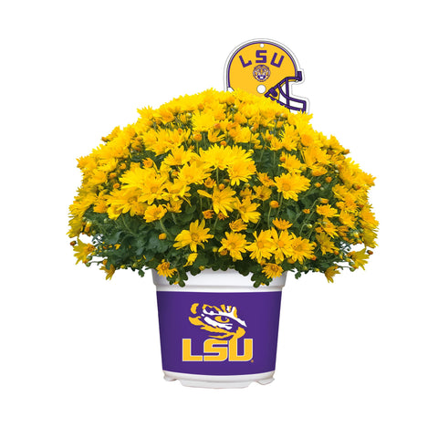 Louisiana State University Tigers - Team Color Mum