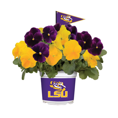 Louisiana State University Tigers - Pansy Mix