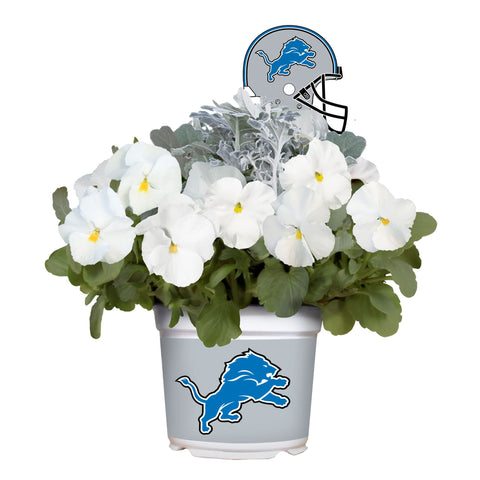 Detroit Lions - Pansy Mix