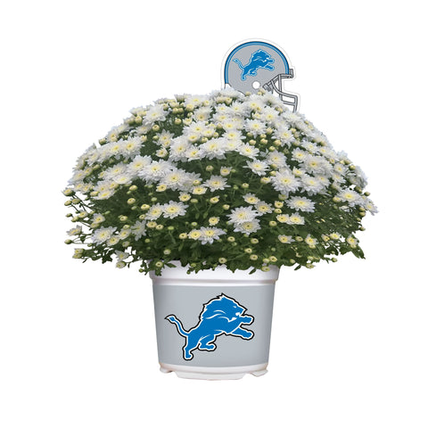 Detroit Lions - Team Color Mum