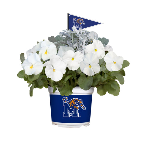 Memphis Tigers - Pansy Mix
