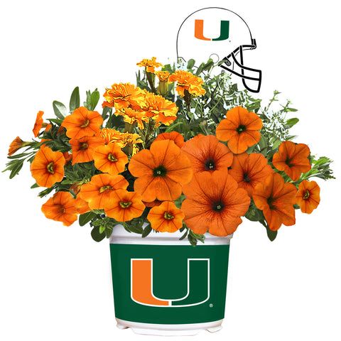 Miami Hurricanes - Summer Flower Mix