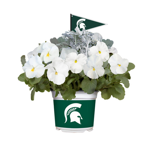 Michigan State Spartans - Pansy Mix