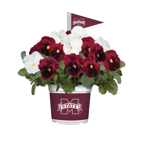 Mississippi State Bulldogs - Pansy Mix