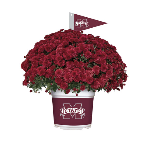 Mississippi State Bulldogs - Team Color Mum