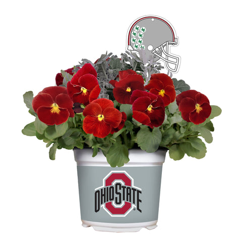 Ohio State Buckeyes - Pansy Mix