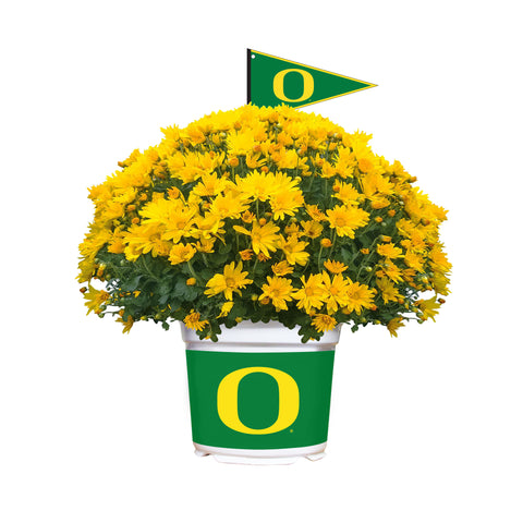Oregon Ducks - Team Color Mum