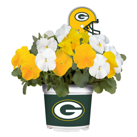 Green Bay Packers - Pansy Mix