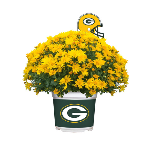 Green Bay Packers - Team Color Mum