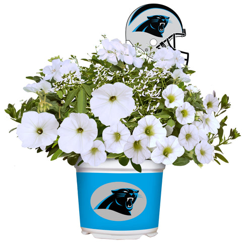 Carolina Panthers - Summer Flower Mix