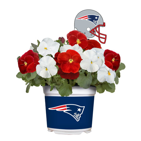 New England Patriots - Pansy Mix