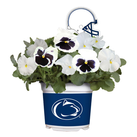 Penn State Nittany Lions - Pansy Mix