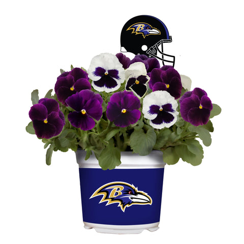 Baltimore Ravens - Pansy Mix