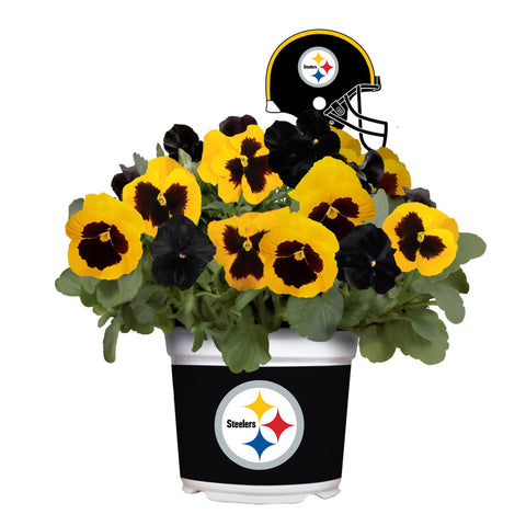 Pittsburgh Steelers - Pansy Mix