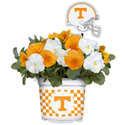 Tennessee Volunteers - Pansy Mix