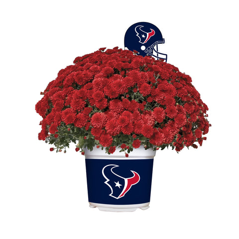 Houston Texans - Team Color Mum
