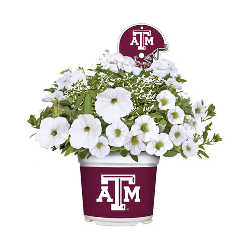 Texas A&M Aggies - Summer Flower Mix