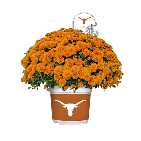Texas Longhorns - Team Color Mum