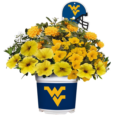 West Virginia Mountaineers - Summer Flower Mix
