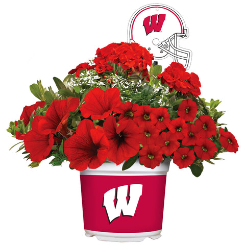 Wisconsin Badgers - Summer Flower Mix