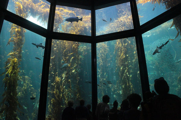 Monterey Bay Aquarium Best Aquariums in North America