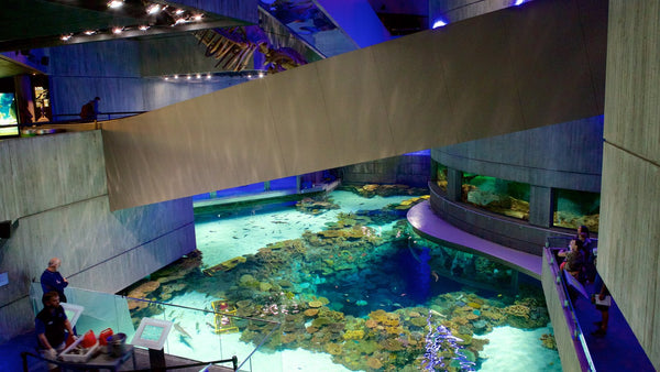 National Aquarium Best Aquariums in North America