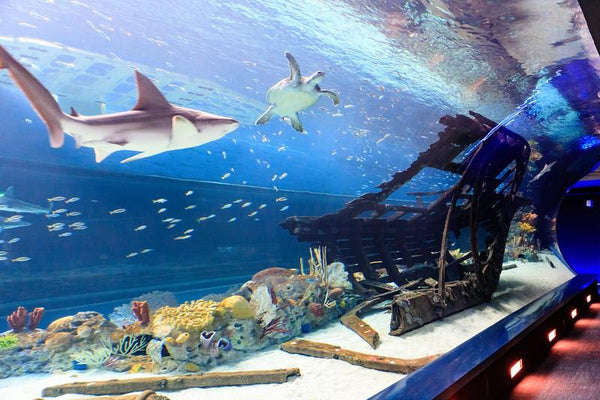Texas State Aquarium Best Aquariums in North America