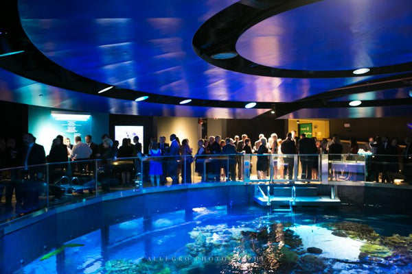 New England Aquarium Best Aquariums in North America