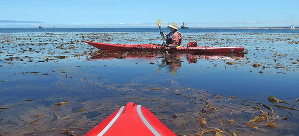 Kayak Monterey Bay National Marine Sanctuary