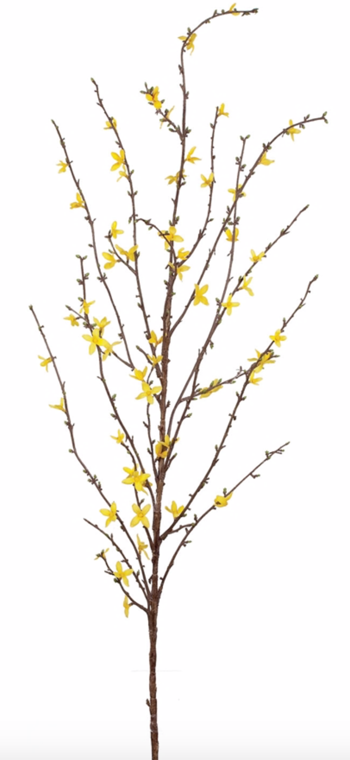 Forsythia Stem