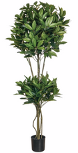 **NEW** Shikiba Topiary Tree