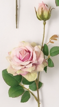 Freshline Rose Stem