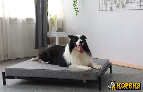 Raised Bed with Mattress for Dogs and Pets Extra Large XL - Grey & Black
