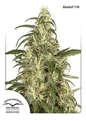 Skunk #11 Feminised Seeds