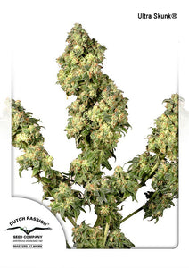 Ultra Skunk Feminised Seeds