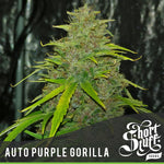 Purple Gorilla Auto ♀