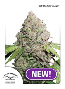 CBD Charlotte's Angel Feminised Seeds