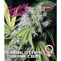 Charlotte's Dream CBD♀