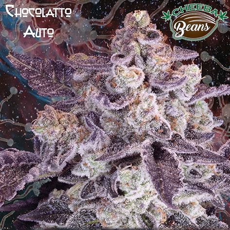 Chocolatto Auto ♀