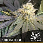 ShortStuff No.1 Auto ♀