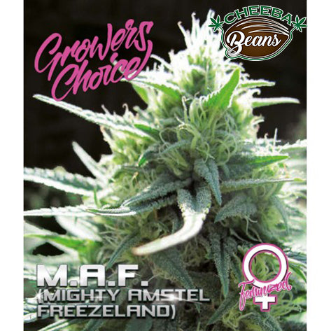 M.A.F (Mighty Amstel Freezeland) ♀
