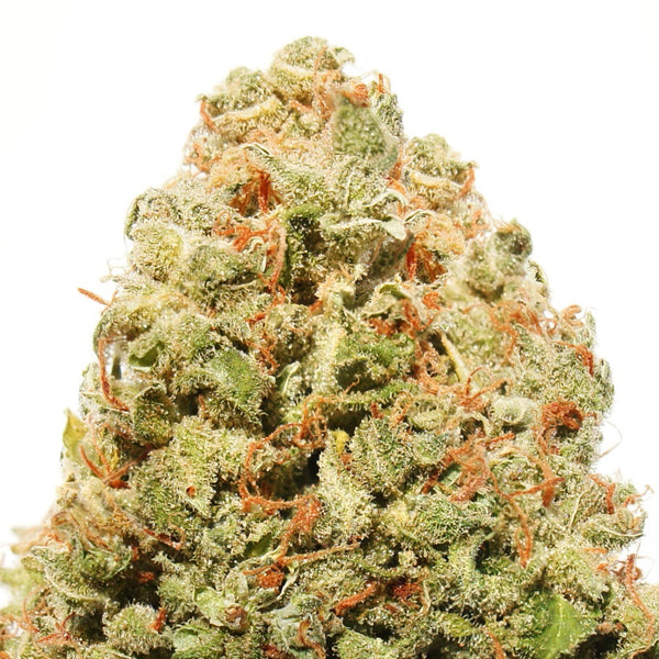 Strawberry Cake Feminised Seeds