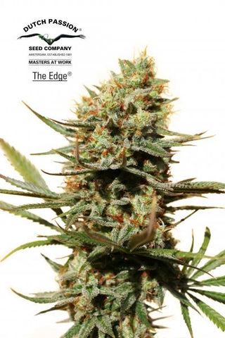 The Edge Feminised Seeds