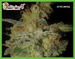 The Incredible Bulk Auto Feminised Seeds
