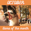 October's Llama of the Month!